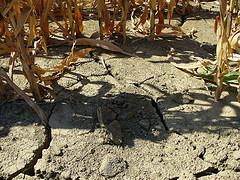 desertificazione