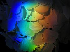 through-a-prism-brightly