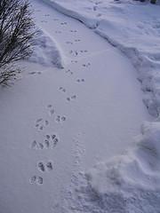 bunny-trail