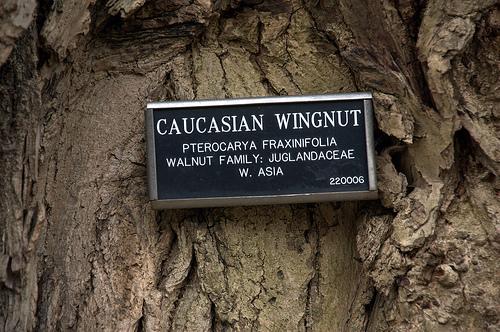 wingnut-signage