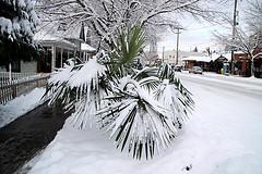 snow-in-miami