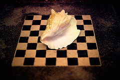 conch and chess board